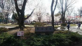 2019桜1.jpg